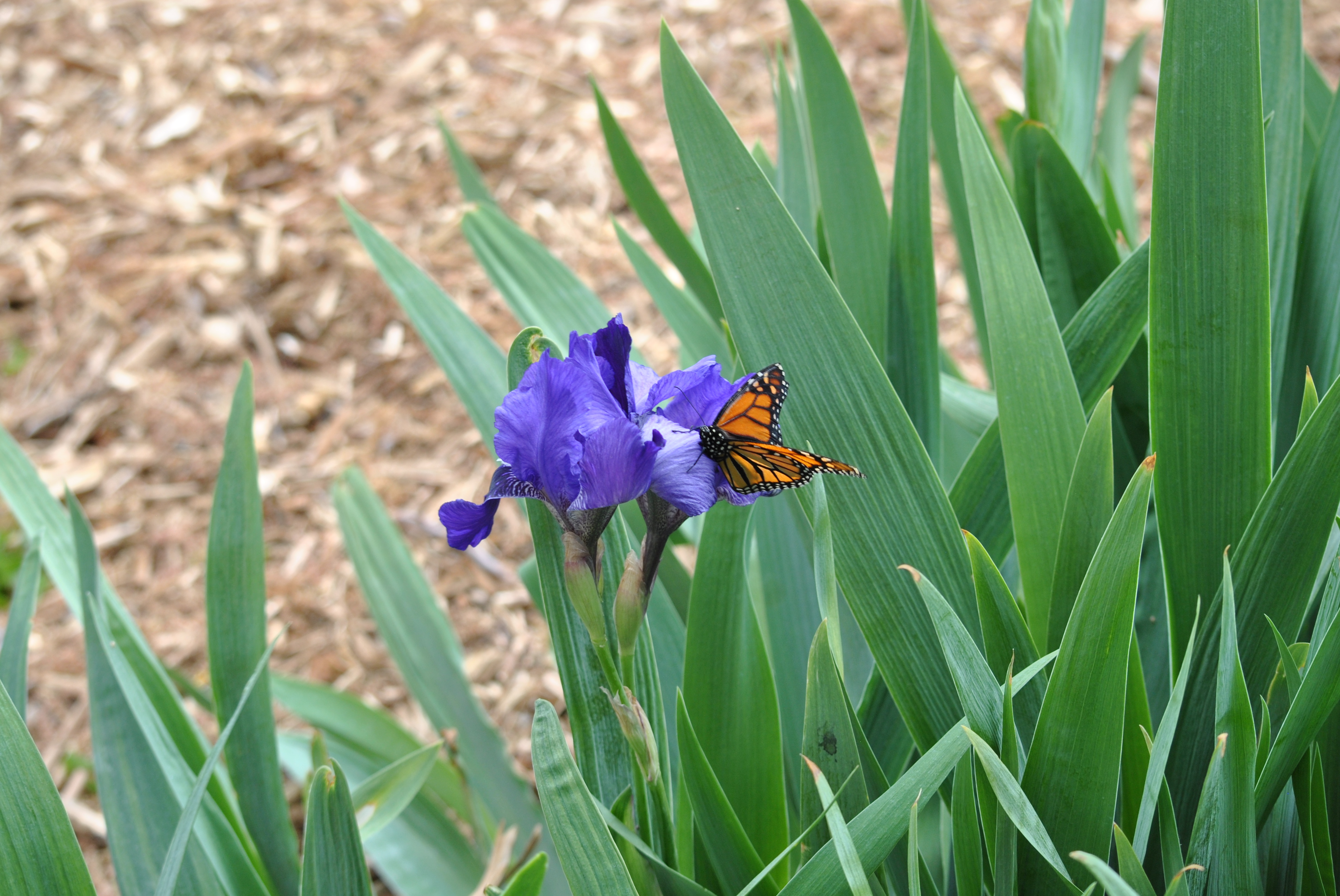 Released_Butterfly